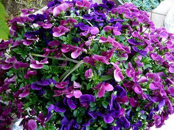 2019.3庭の花11.jpg