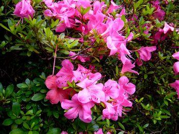 2019.6庭の花.jpg